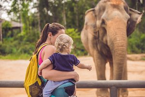 Mom and son feed the elephant at the