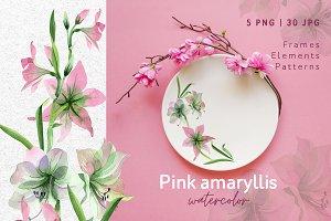Pink amaryllis  Watercolor png