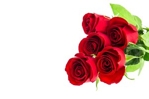 Red rose flowers bouquet white back