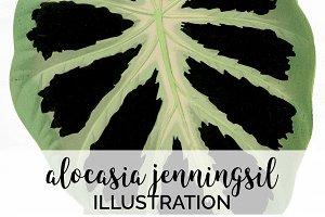 Green Leaf Alocasia Watercolor