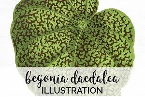 Begonia Green Leaf Vintage Leaves