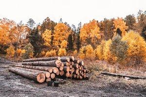 Cut tree trunks near a forest