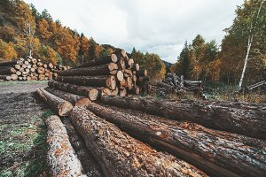 Multiple stacks of logs in the woods
