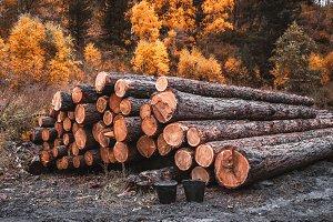 The heap of freshly cut tree trunks