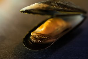 mussel on dark slate background