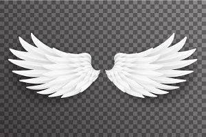 White bird angel fly wings