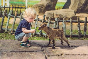 Small cute boy is feeding a small