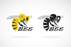 Vector of bee design. Insect. Animal