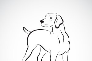 Vector of labrador dog.Pet. Animals.