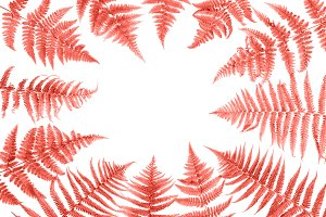 Fern leaves trendy color coral
