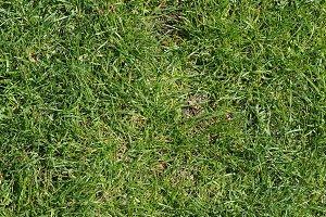 green meadow background diagonal til