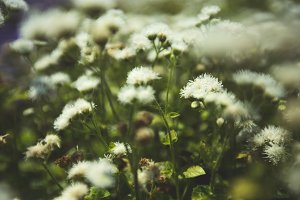 Summer flowers #20