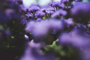 Summer flowers #21