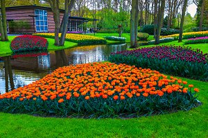 Colorful spring tulips in garden