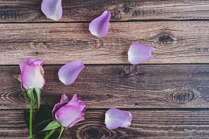 Two Pink Rosses on Rustic Wood