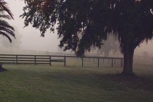 Foggy Farm Stock Photography
