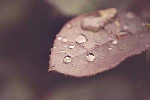 Raindrop Macro Stock Photography