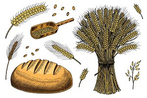 Set of wheat, rye spikelets