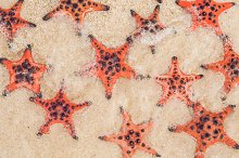 Red starfish on white sand on sunny by  in Photos