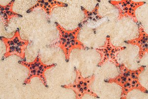 Red starfish on white sand on sunny