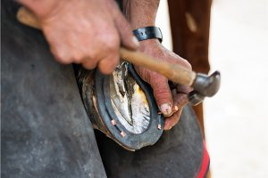 Farrier nailing a horseshoe to the