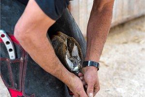 Farrier at work on horses hoof