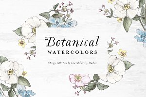 SALE Botanical Watercolor Collection