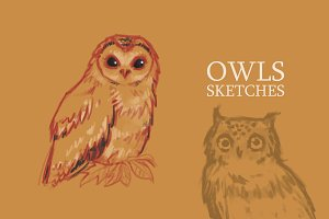 Owls sketches set