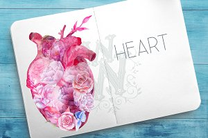 Watercolor heart anatomy clipart