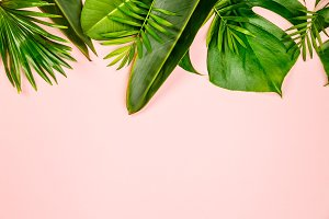 Tropical leaves and flowers on pink