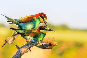 colored birds in the spring