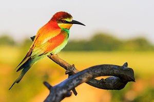 dreamy beautiful bird sitting on a