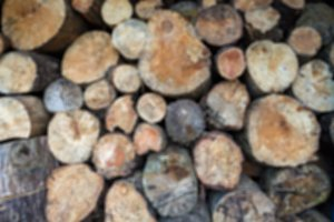 Timber logs blurred