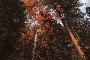 An autumn bush in the woods
