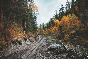 The earthroad in a fall forest
