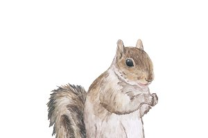 Hand drawn squirrel on white
