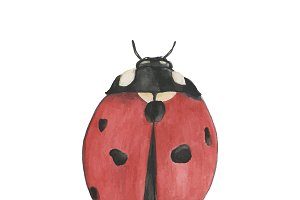Hand drawn ladybug isolated on white