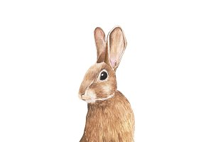 Hand drawn rabbit isolated on white