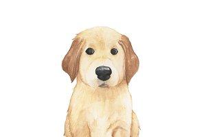 Hand drawn golden retriever dog