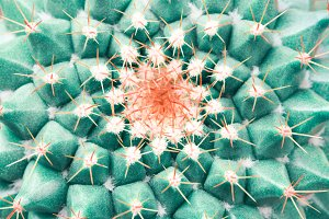 Top view on cactus.