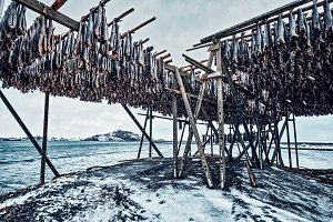 Drying flakes for stockfish cod fish