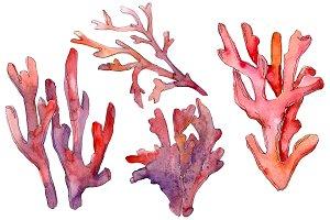 Corals Watercolor png