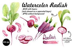 watercolor radish. vegetables
