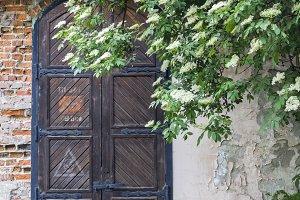 Old door and tree branch