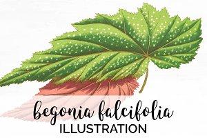 Leaves Begonia Falicifolia Vintage