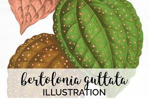 Vintage Leaves Bertolonia Guttata