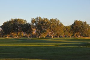 A  green golf course and  trees