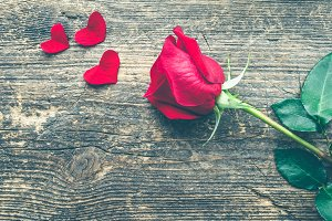 Red rose flower with red hearts