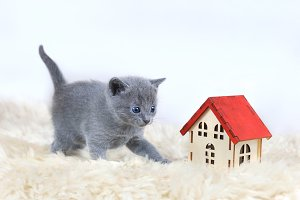 One month old kitten, toy house