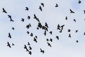 Mystical birds reveal wings flying